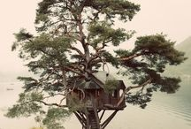 Architecture: Tree Houses / by Vidda Chan