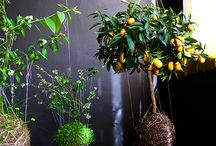 Jardinagem / by Cintia Gomes