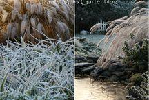 Wintergarten / Impressionen aus einem winterlichen Garten. http://tantemalisgartenblog.blogspot.co.at/