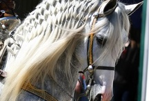 STUNNING HAIR STYLES FOR HORSES!
