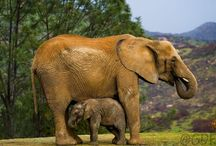 All God's Critters - Elephants/Giraffes/Zebras / by Kay Hough