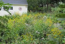 Natural Plantings / Small, diverse, and informal natural plantings attract myriad forms of wildlife.