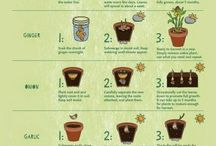 Growing Foods