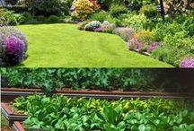 Kertek, növények
