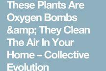særlige planter