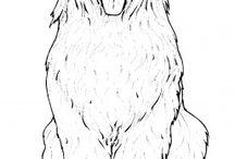 Oud engelse herdershond