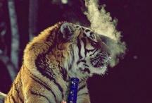 high life♡