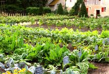 Zahrádka / Pomoc při zahradničení