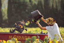 Les Vendanges - It's harvest time / Your Private Provence is hosting a week in Provence during the wine harvest.  Start thinking about reserving your September 2014 escorted tour now.