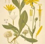 Herbs / by Believe Midwifery