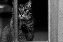 cats <3.<3