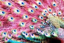 かわいい動物ピンク素材