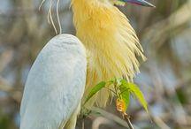 aves rarasy hermosas
