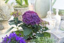 Flower arrangements - blomster arrangementer
