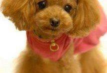 강아지미용사진