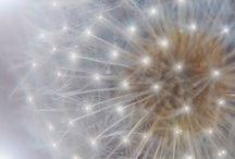 Make a wish! / Dandelion Motif evokes a childlike whimsy. / by Joy Light