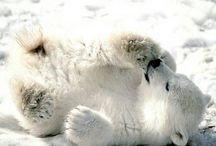 Cute&funny animals