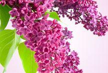 Radiant Orchid: Pantone 2014