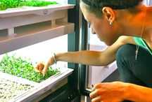 Sprouting for Health and Preppers!