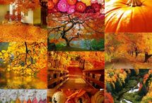 Autumn / Sonbahar