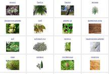 Парфюмерные ноты / fragrances notes / Описание основных парфюмерных нот, из которых состоят ароматы / description about the main perfume notes