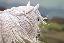 Horse art / photography