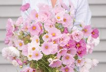 2017 New Cut Flowers / Here's what's new for 2017 from NGB member Johnny's Selected Seeds. Johnny's is committed to helping gardeners succeed with superior seeds, tools, information, and service.
