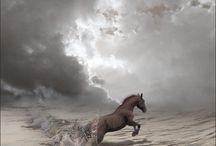 horse at sea