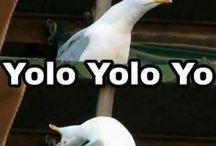 Weird bird meme
