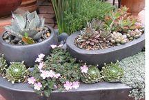 Gardening / Garden Inspirations and Flowers