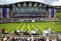 British Racecourses / This Collection of British racecourses gives details of both current and former horse racing venues in Great Britain.