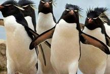 Pingu!:) / <3 <3<3