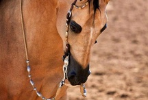 A Horse of a different color..... / by Sandy McClay