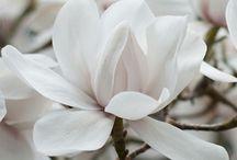 Flower Power / #flowet #bouquet #plant