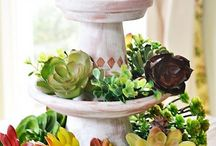 Clay pot succulent display