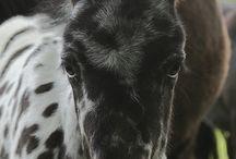 Horse lover  / by Cassie Whieldon