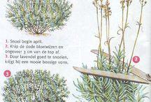 * planten/bomen snoeien *