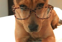 Cute eyeglass pictures