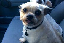Man's Best Friend.. / Molly & Sophie