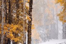 Зима и Осень- тишина ,безмолвие..