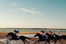Caballos / Carrera de caballos Sanlucar 2015