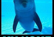 Captivity is cruel !!