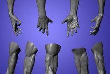 Anatomy Class - Arm