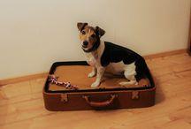 Kofferkörbchen / Hundekörbchen,