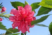 Kwiaty / Różnego rodzaju Kwiaty
