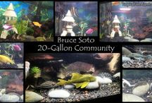 Customer Aquariums / Freshwater Aquariums and Ponds submitted to our Summer 2015 Photo Contest