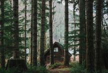 Forest lifestyle