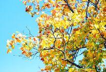 Herbstzeit / Es wird kälter, Zeit für heiße Schokolade und ganz viel Tee. Warme Wolldecken, Spaziergänge unter rauschenden Bäumen. Orange-gelb-rote Blätter.