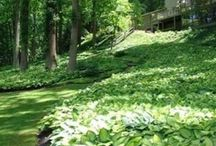 Kasvillisuus -Plants / Kasvillisuusideoita - Planting ideas