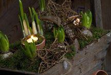 Flower arrangement